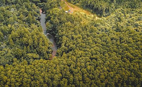 Bariri tem 7,3% de cobertura vegetal nativa